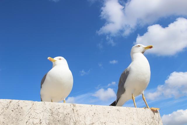 Чайки в Риме на фоне голубого неба