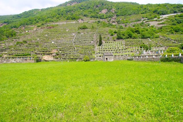 Виноградники в Валле д Аоста