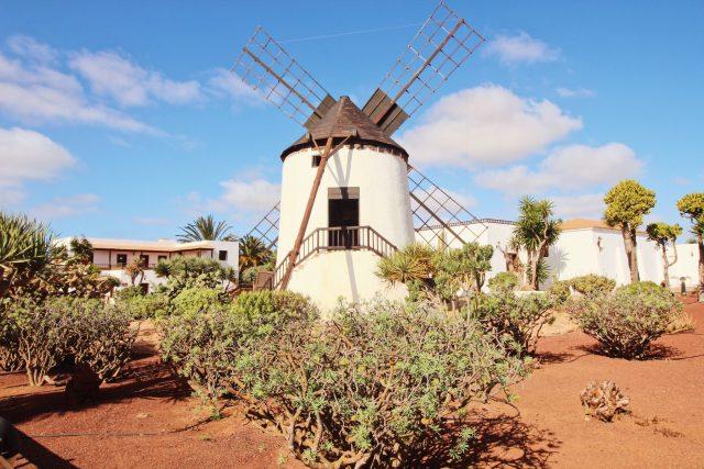 Музей сыра на острове Фуэртевентура