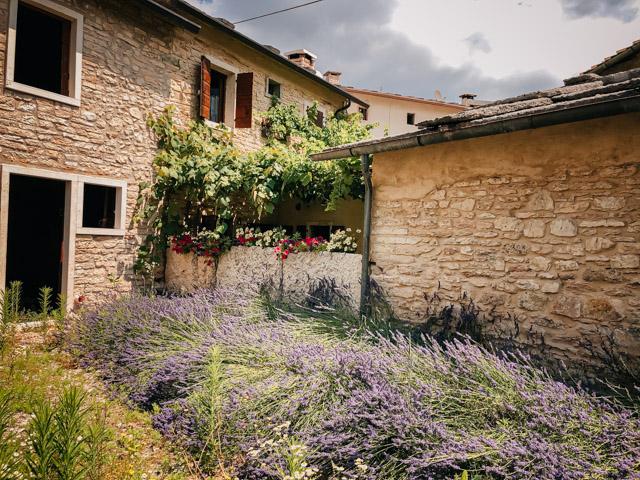 lavanda_v_italii