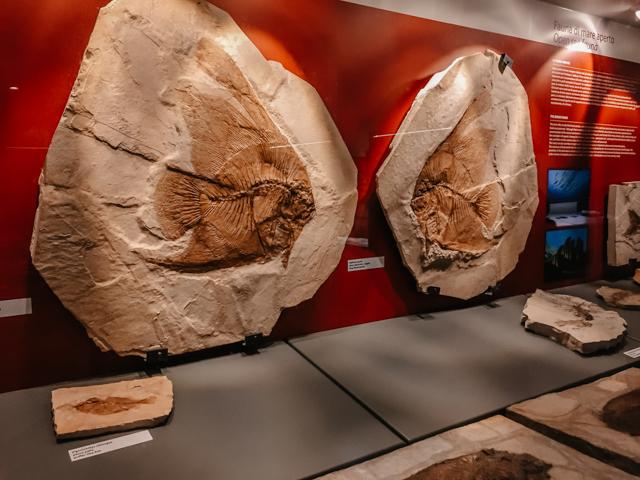 Музей окаменелостей в Болька Италия