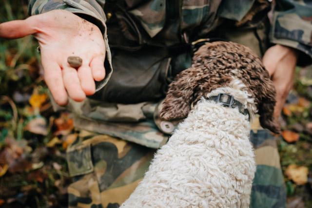 на фото охотник на белый трюфель в городе савиньо рядом с Болоньей, у него в руках белый трюфель, рядом собака породы лаготто романьорло